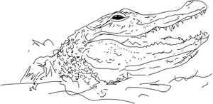 Aligator_2